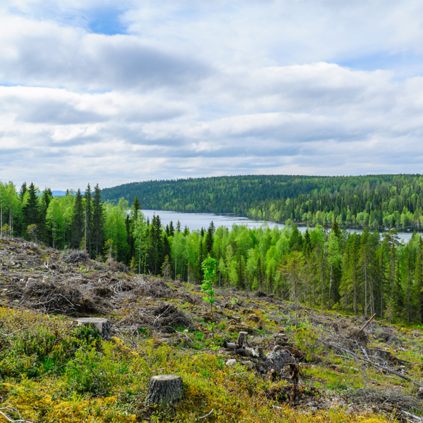 https://tripmydream.by/flights/city/kuusamo