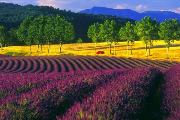 Чем заняться в Провансе: 5 тематических маршрутов