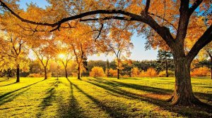 Куда поехать осенью в Украине: 8 маршрутов выходного дня