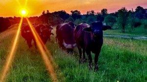 Не тільки Буковель: варіанти осіннього відпочинку в Закарпатті
