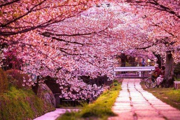 Весеннее Закарпатье: 5 идей для знакомства с регионом