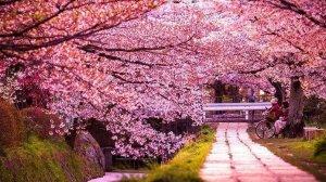 Весняне Закарпатті: 5 ідей для знайомства з регіоном