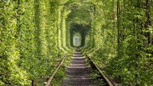 Тоннель любви в Клевани: иде� дл� романтиче�кой поездки на уик�нд