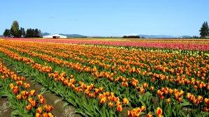 Цвети и пахни: 5 лучших дендропарков Украины, которые стоит посетить