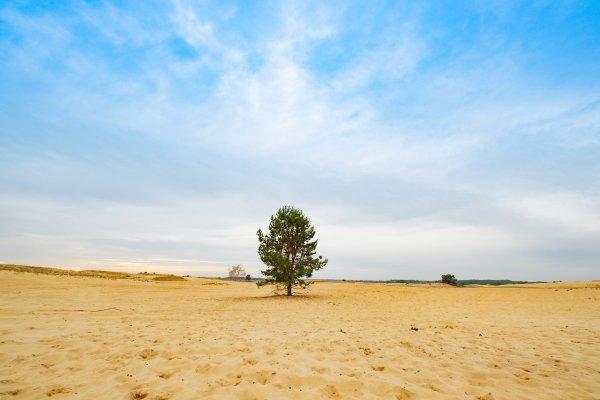 Пустыня, ветряки и розовые озера: 2-дневный маршрут по Херсонской области