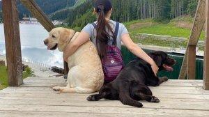 Личный опыт: как поехать в Карпаты с двумя собаками