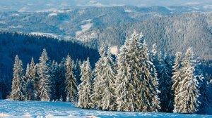 Где недорого отдохнуть в Украине зимой