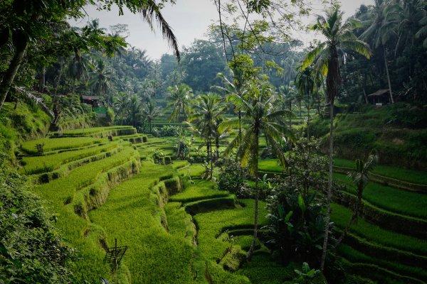 Бали откроется для туристов. Какие будут условия для въезда?