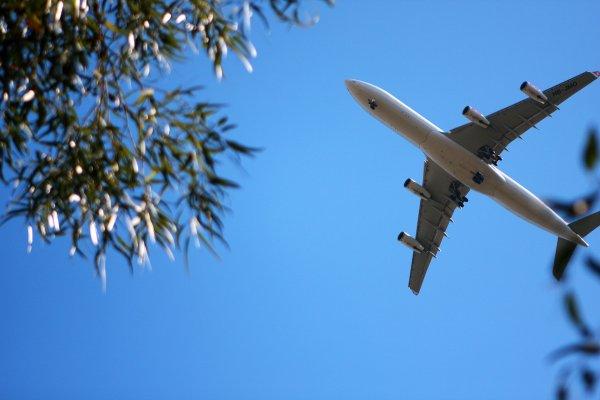 Bees Airline получил права на полеты в Европу