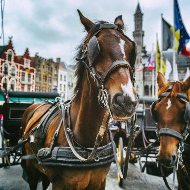 Конный экипаж в Брюгге