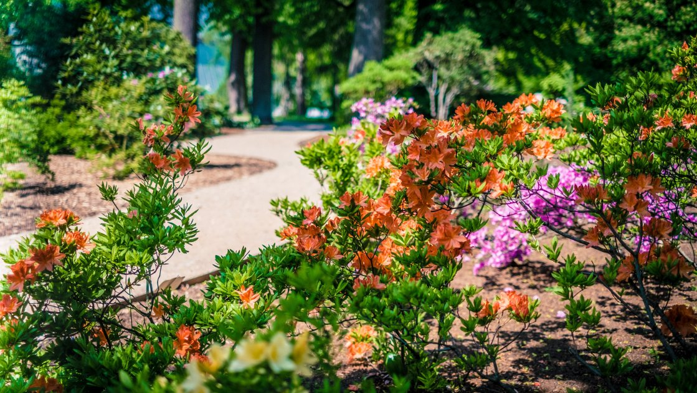 Ботанічний сад - Рига