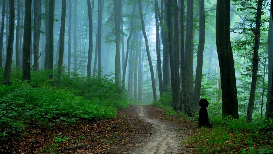 Вольский лес - Краков