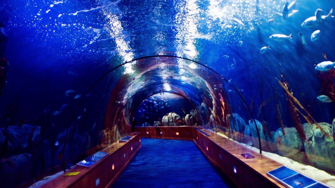 Океанографічний парк