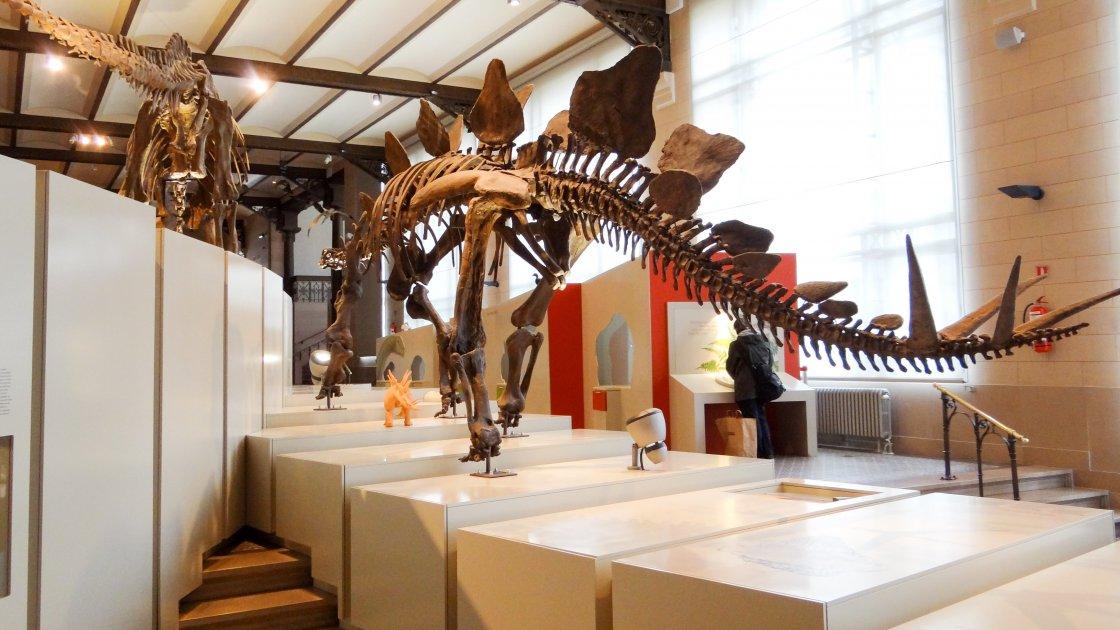 Музей естественных наук - Брюссель
