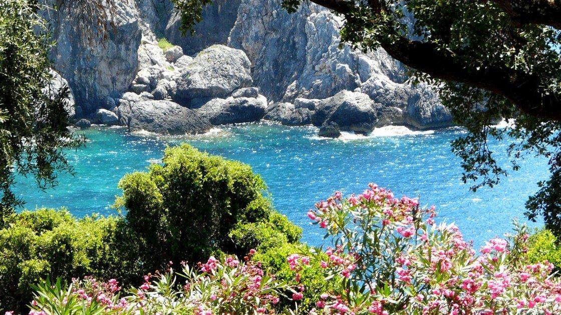 Вечнозеленый остров