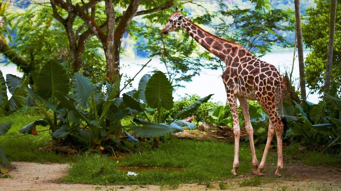 Зоопарк Сінгапуру