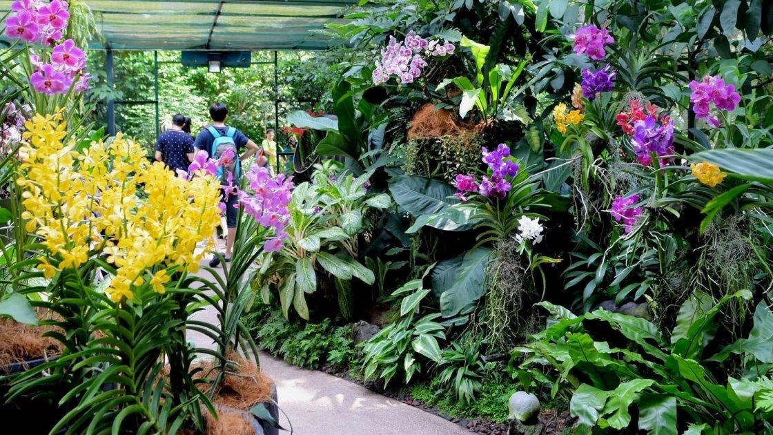 Парк орхідей