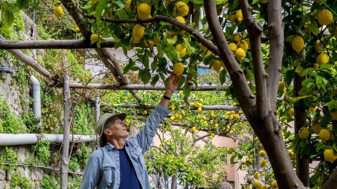 Лимоновая роща на Амальфи