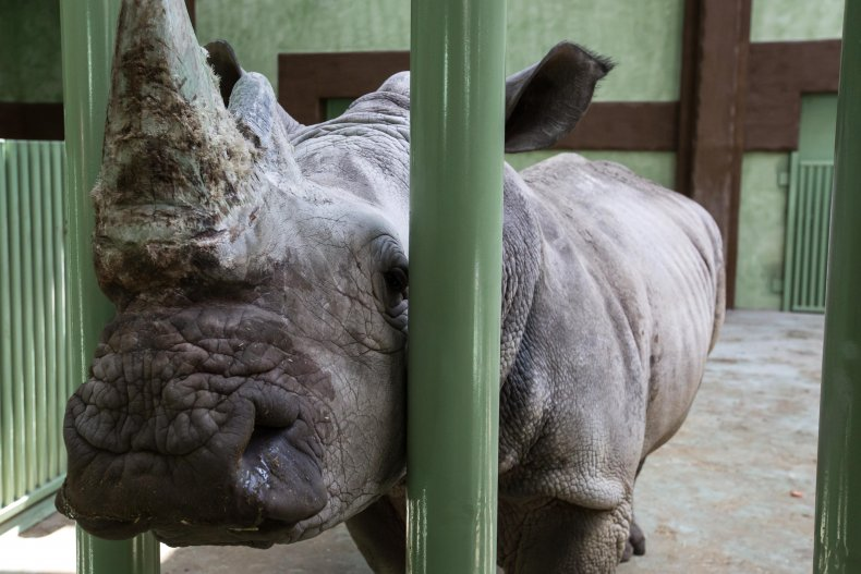 Белый носорог, Зоопарк 12 месяцев