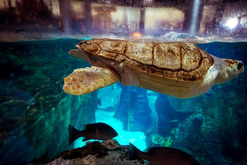 Черепаха в стамбульском аквариуме