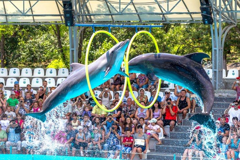Дельфинарий Одессы