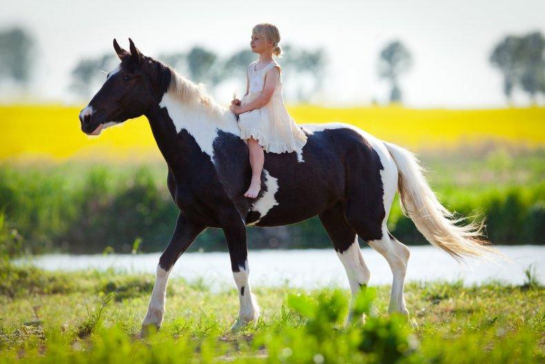 конный клуб Сплита, отдых с детьми