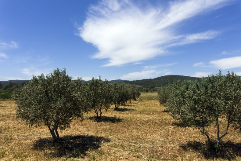 Растительность Кальяри