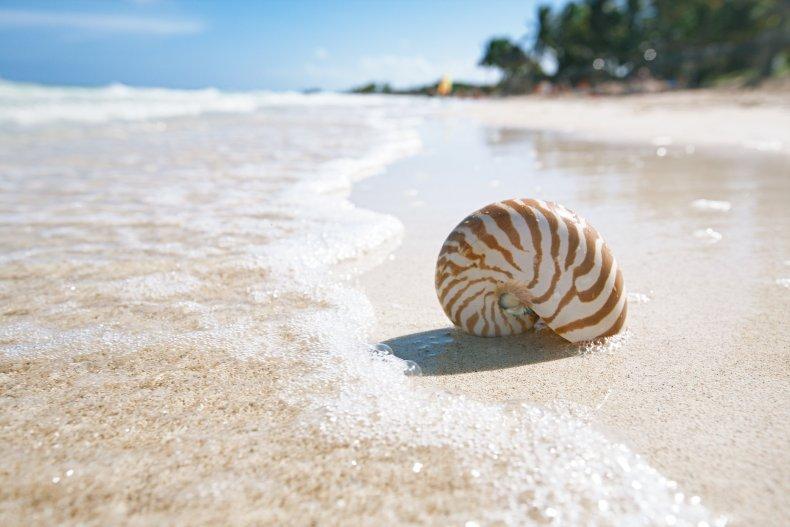 Когда лучше ехать на Кубу - сезон отдыха на Кубе